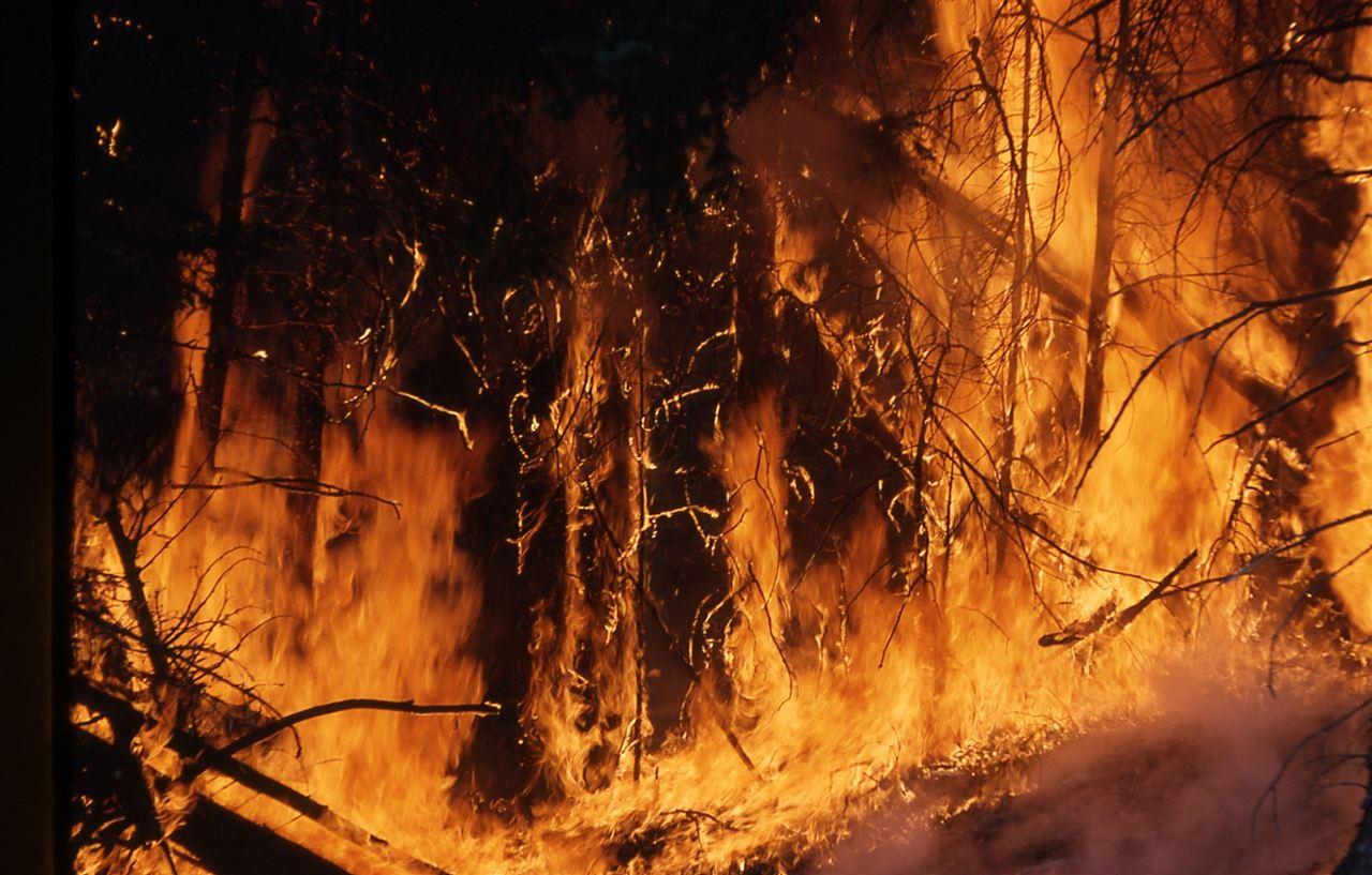 凉山再燃山火 科技助力林火预警