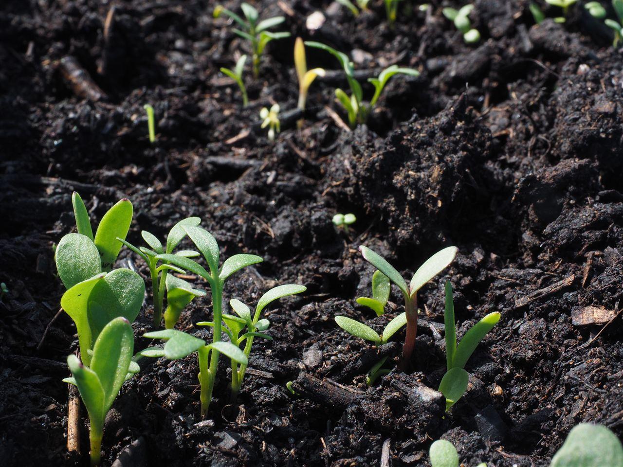 生态环境部征求三项土壤污染物测定标准意见 涉气质联用仪等